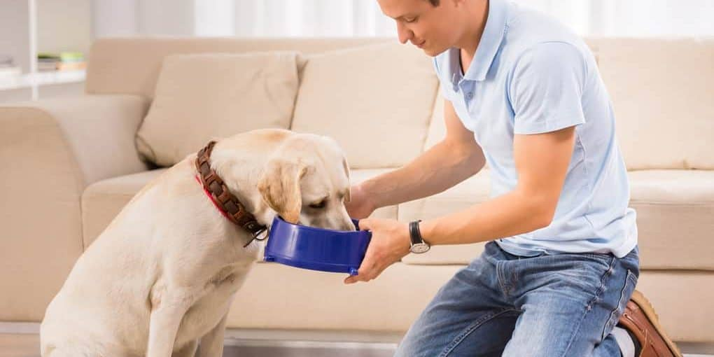 How Much Food Should I Feed My Dog Per Day